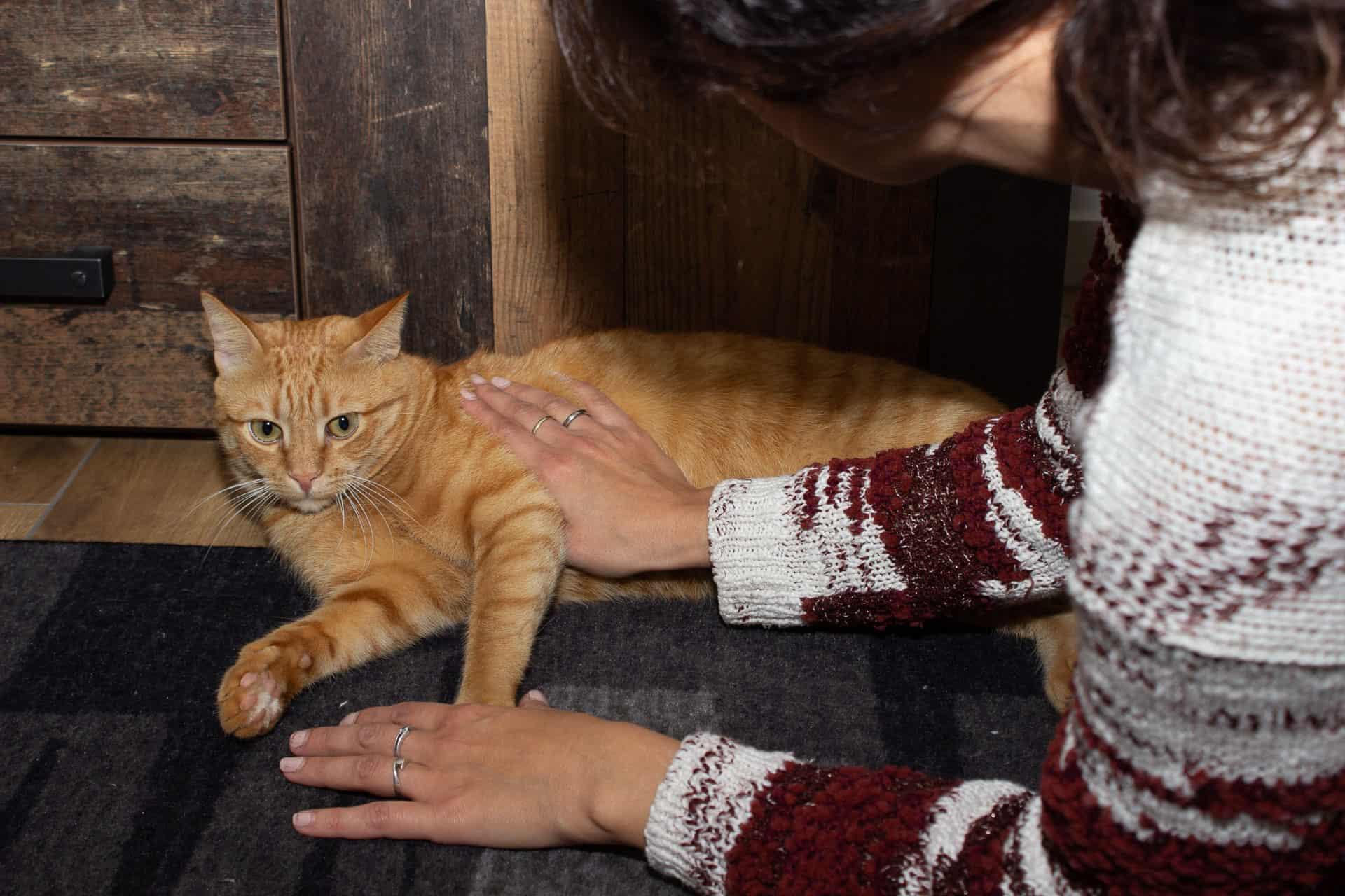 1. Hilfe für Haustiere